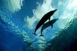 Deep Blue Dolphin Love